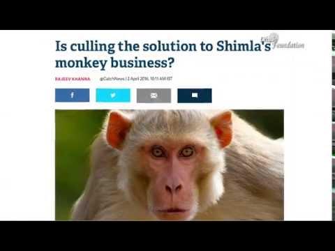 Eradicating the hunger of Monkeys