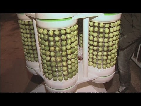 World's first Brussels Sprout powered Christmas tree - Kids and Science