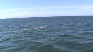 Aletta Sea Swim