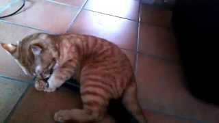 Cat Leo Live / My Cat Leonardo