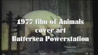 "Pink Floyd 1977 film of ""Animals"" cover art shooting"
