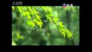 Heart Sutra Mantra - Jing Shanyuan (Yang Xiaolin) 般若心咒 - 敬善媛 (杨小琳)