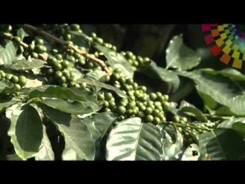 AMA LA VIDA TV – Ecuador- 2da temporada Programa 23 (Zamora Chinchipe)