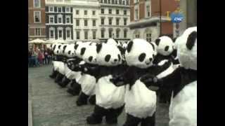 Semana de concientización del panda previo a los Juegos Olímpicos