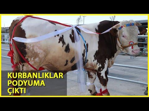 Ankara'da Kurban Güzellik Yarışması