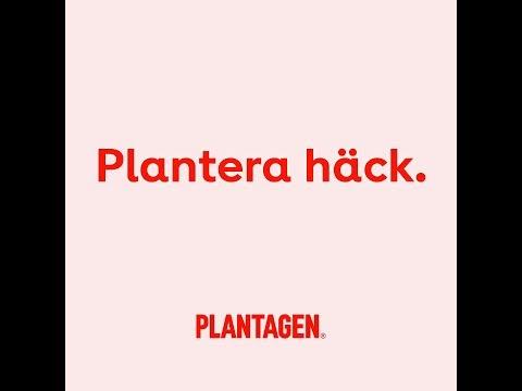 Plantera häck