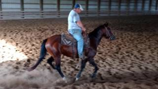 Haida Smoke Dream - 4 yo mare