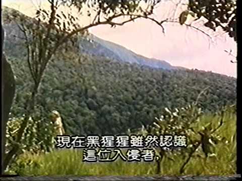 珍古德與黑猩猩 - YouTube