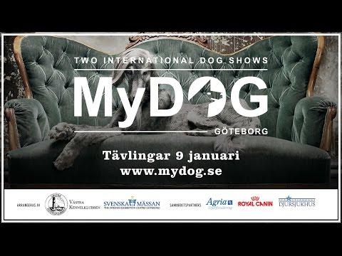 MyDOG: Tävlingar 9 januari 2016