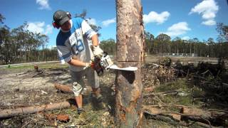 Stihl MS170 Mini Boss chainsaw cold start and review