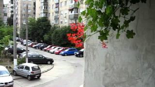 pasare colibri la Oradea