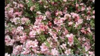 Fleurs du Djurdjura