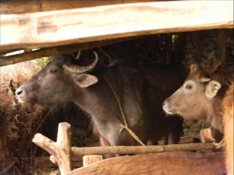 ALIDA tutto nepal 2010 – 14 Trekking Annapurna BIS.wmv