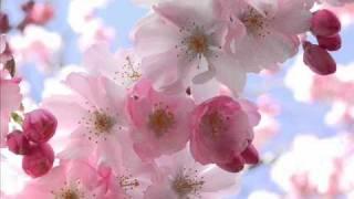 Air - Cherry Blossom Girl (Hope Sandoval version)