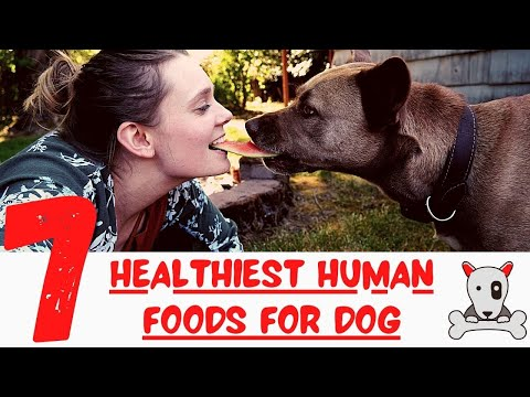 Top 7 Healthiest Human Foods You Should Be Feeding Your Dog