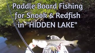 Catching Snook and Redfish from a Paddle Board on a Hidden Lake…