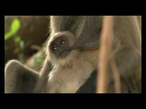 wildlife tv Show promotional of Bangladesh – Monkey / 04