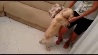 O cachorrinho ceguinho que adora passear! | Vitavet Vídeos