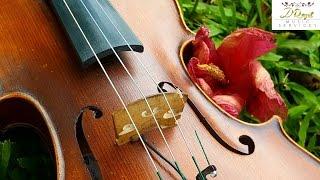 Castillo Labadie, Moca - Eleganza Violin & Guitar (www.eleganzams.com)