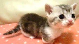 Cuccioli - un simpatico video di animali. Compilazione | Nuovo, HD