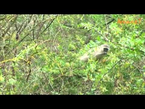 Volunteer Africa – Karoo Cheetah and Wildlife Research Project