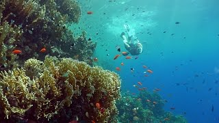 Red Sea Diving Safari - Free Diving Promotional Video in 4K UHD
