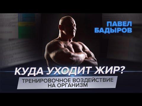 Жиросжигающая тренировка — Павел Бадыров теоретическая часть