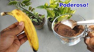 Forma correta de fazer adubo poderoso com cascas de banana |  Florescimento e crescimento rápido.