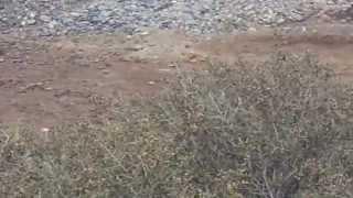Aves cantoras en el Desierto de la Guajira