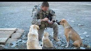 Un Soldado Se Hizo Amigo De 3 Perros. Pero Cuando Estalló Una BOMBA Hicieron ESTO… ¡QUE LOCURA!
