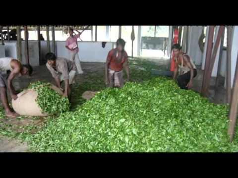 Rejser Ferie Hoteller i Bangladesh Nishorgo Nirob Eco-Cottage Srimongol Bangladesh rejser Ferie