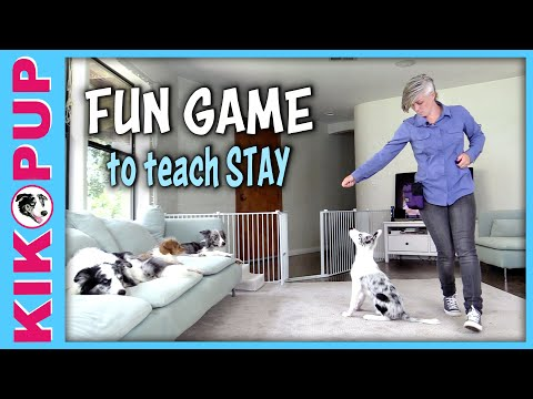 FUN GAME to teach STAY
