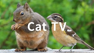 Cat TV: 6 Hours - Beautiful Birds, Squirrels, Nature sounds in Canadian Forest