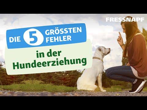 Die 5 größten Fehler in der Hundeerziehung