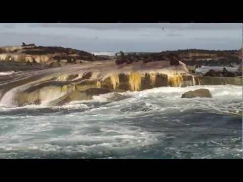 Hout Bay – Seal Island