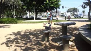 Bulldog Boris na Beira Mar Florianópolis