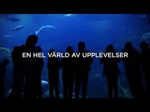 Välkommen till Universeum - här börjar äventyret!
