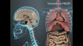 Os efeitos do Álcool no organismo Playmagem