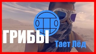 Грибы - Тает Лед   (Remix Video)