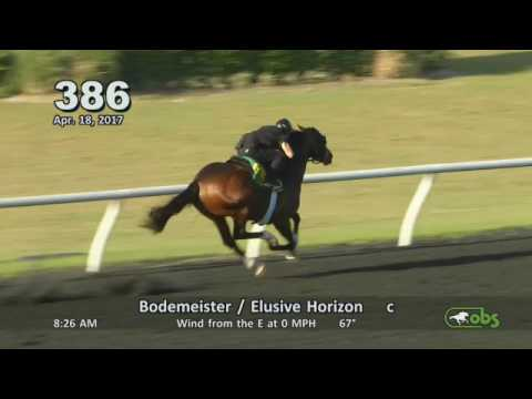 Hip #386 Bodemeister -Elusive Horizon OBS April 2017
