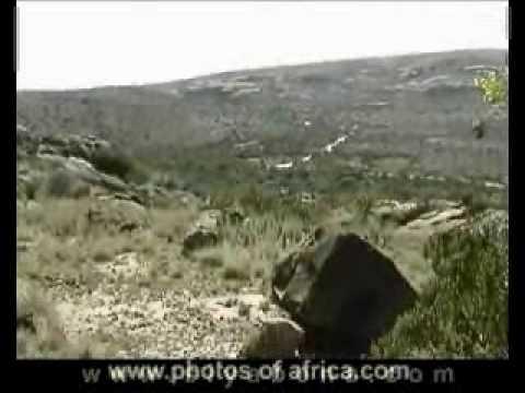 Mountain Zebra National Park South Africa