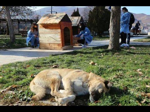 Kışın sert geçtiği Tunceli'de, gençlerden sokak hayvanları için kulübe