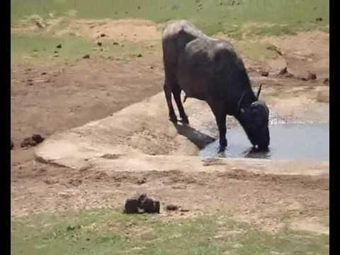 Elephants, Birthday's & Cows