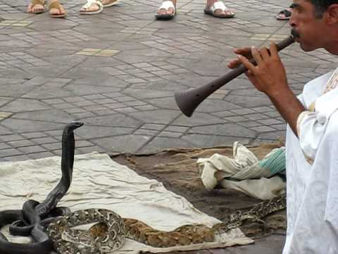 Moroccan Snake Charmer, second vid