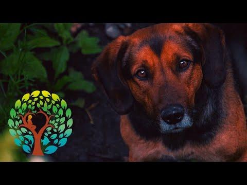 Sirviendo con los Canes: Capítulo 1 – 19/10/2020