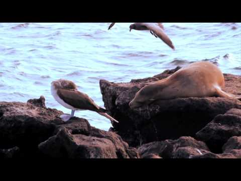 "Galapagos Marine Birds… the ""eyes of the seas"""