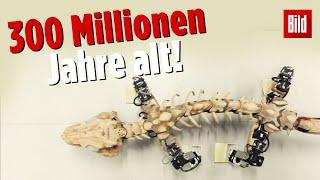 Forscher lassen Ur-Saurier wieder laufen