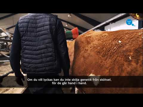 VikingGenetics presenterar