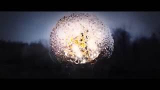 Tara McDonald - I Need A Miracle (Official Video)
