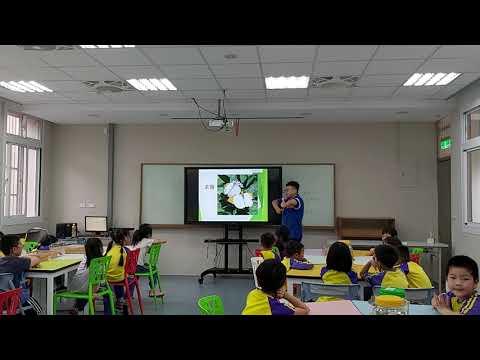 影片 草食性昆蟲1 - YouTube